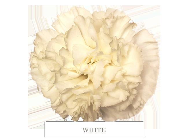 white 70