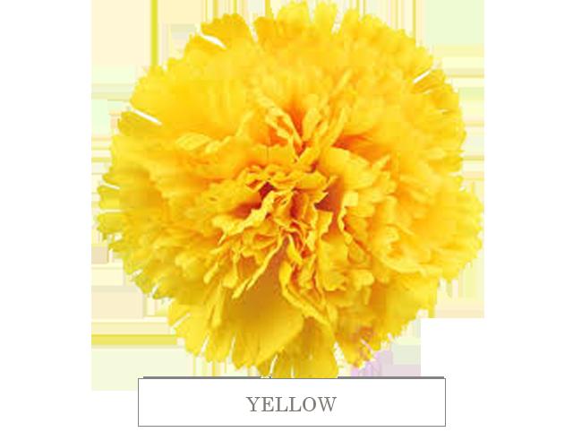 yellow 70